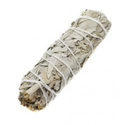 California White Sage 14 cm
